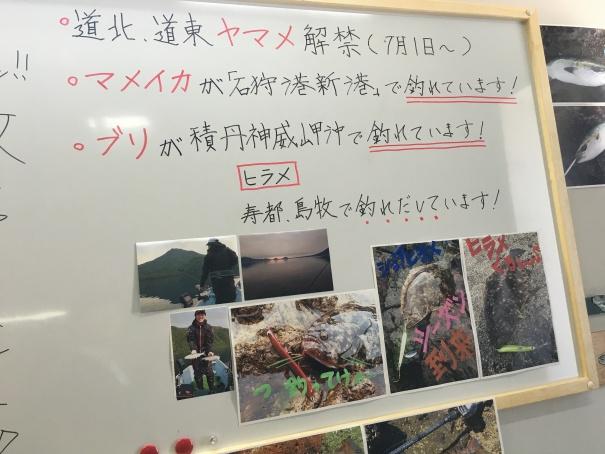 札幌の釣果