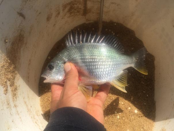 淡路島で紀州釣り