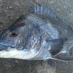 【淡路島】夏本番の淡路島で紀州釣りを楽しみました