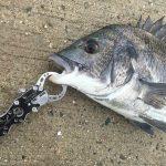 【淡路島】そなえよつねに!準備不足でも釣れてくれた燻銀に感謝!