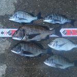 【淡路島】夏の終わり、秋の気配がする淡路島でちょっと物足りない紀州釣りとなりました