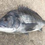 2016年の紀州釣りデータをまとめてみた件