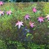紀州釣り師の紅葉狩り「箕面の滝」