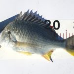 【淡路島】シーズン終了か?冬の爆風が吹く淡路島での紀州釣り結果