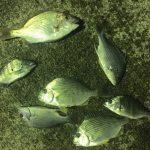 【南紀】紀州釣りの越冬地で団子を投げた結果