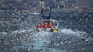 いかなご漁で春の淡路島を想う2018