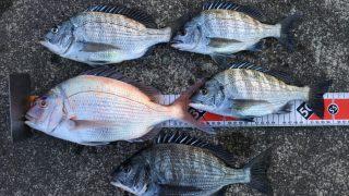 【淡路島と南紀】紀州釣りを三日連続で楽しんできました