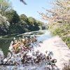 綺麗な桜が残る彦根へお墓参りに行って来ました〜龍潭寺、井伊神社、彦根城お堀〜