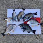 淡路島の釣果