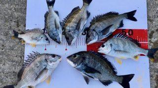 【淡路島】夕まずめ、なぎ状態の海で紀州釣りを楽しむことができました