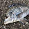【淡路島】燻銀チヌは今回も出ませんでしたが、淡路島の美味しい海鮮丼に癒されて帰ってきました