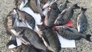 【淡路島】苦手を克服すると、紀州釣りの新しい世界が見えてきました(1日目)