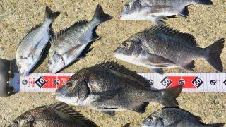 【淡路島】苦手を克服すると、紀州釣りの新しい世界が見えてきました(2日目)