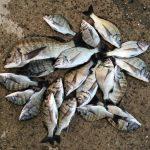 【基本】紀州釣り(団子釣り)という釣り方について