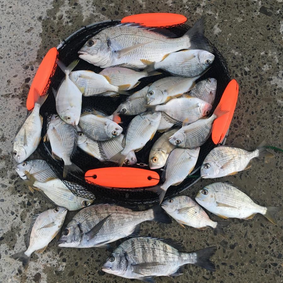 和歌山南紀の魚
