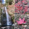 紀州釣り師の紅葉狩り「箕面の滝」2017