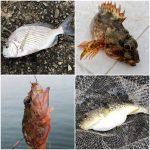 【三重】紀州釣りの初釣り場所は三重!