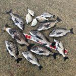 【淡路島】梅雨爆が半端ない!団子が尽きるまで燻銀チヌを釣って来ました