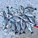 【淡路島】風が強くて雨がたくさん降った後の紀州釣りは数釣りを楽しんできました
