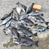 【淡路島】入魂完了!K-Craftさんの餌箱(スギ一層式紀州釣り仕様)で夏チヌを楽しみました!