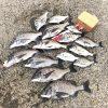 【紀州釣り】秋の海に変わっていく淡路島でチヌ釣りを楽しんできました!
