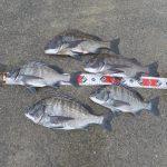 【紀州釣り】淡路島の秋チヌは嵐の前に釣れ!