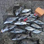 かざすAI図鑑アプリ「LINNÉ LENS(リンネレンズ)」で釣った魚の写真を認識できるか試してみた!