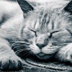 釣り人の眠気解決法はこれ!カフェイン摂取後の20分の仮眠がベスト!