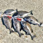 【紀州釣り】三連休最後の日に淡路島で秋チヌを釣ってきました