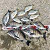 【紀州釣り】ロッドケース転がり、イスが落下!今週も爆風の中で淡路島のチヌを楽しんできました!