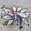 【紀州釣り】淡路島で痛恨の大バラし!立ち直るまでにしばらくかかりそうです