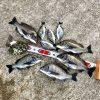 【紀州釣り】淡路島の秋チヌはまだ釣れてます!時合は日没後もキター!!