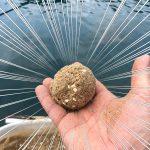 【秋冬】今からでも間に合う紀州釣りでチヌを釣る方法