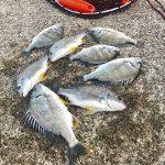 【釣行記】一足お先にGW突入!淡路島のチヌを紀州釣りで狙った結果はチヌボーズ!