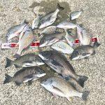 【釣行記】年無し混じりで淡路島の紀州釣りを楽しんできました!