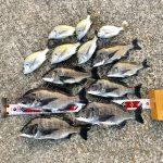 【釣行記】淡路島で夏チヌを満喫してきました!チヌ:8匹、キビレ5匹、ヘダイ1匹