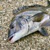 なぜ釣り人はブログやSNSで釣り場所を公開するのか?