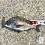 【釣行記】台風が来る前の淡路島で紀州釣り団子を投げてきました!