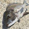 【マイクロプラスチック】海を汚さない釣り人になりましょう!