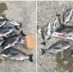 【釣行記】淡路島で台風後のチヌ爆を楽しんできました!(2日間)