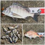 【釣行記】淡路島と南紀で釣り納め完了!厳しい釣りでも最後にチヌが釣れました!(2019年12月28-29日)