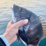 【釣行記】3月の淡路島を攻略!チヌ41センチと38センチ、デカアジ18匹をゲットォ!!KunGinDoの寝ウキとDaiwaのリアルオキアミも試してきました