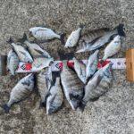 【釣行記】ロックダウン目前?淡路島で春チヌを楽しんできました!チヌ12匹、キビレ4匹