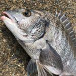 緊急事態宣言解除で淡路島の釣り場所の解禁も進んでる!