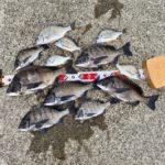 【釣行記】コロナ解禁後の淡路島で紀州釣り!チヌ7匹、キビレ5匹の釣果を出した2つのキーポイントを紹介