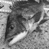 もし紀州釣り8年分の釣行費用を全額投資していたらどうなったいたか?〜釣りと投資に集中する日々が釣りを極めるために必要な理由〜