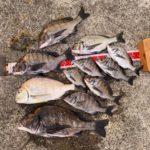 【釣行記】秋の淡路島で年無しゲットォ!!秋爆が始まってます!