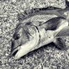 紀州釣りツイートまとめ〜釣りに行けないときは釣りのことを考えています