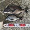 【釣行記】秋の淡路島でおチヌ様ゲット!まだまだ淡路島の海は元気です!