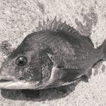 紀州釣りツイートまとめ〜釣りに行けないときは釣りのことを考えています〜2020年10月15日